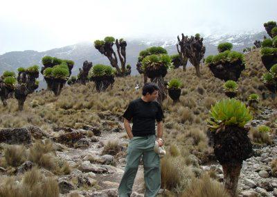 Mount Kenya-100
