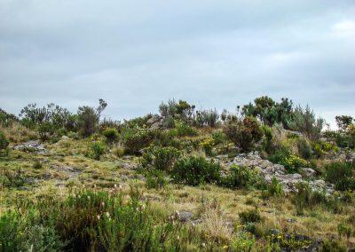 Mount Kenya-27