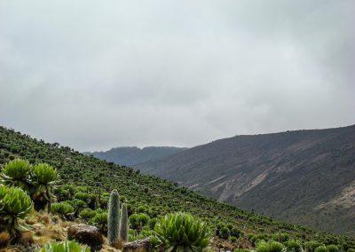 Mount Kenya-77