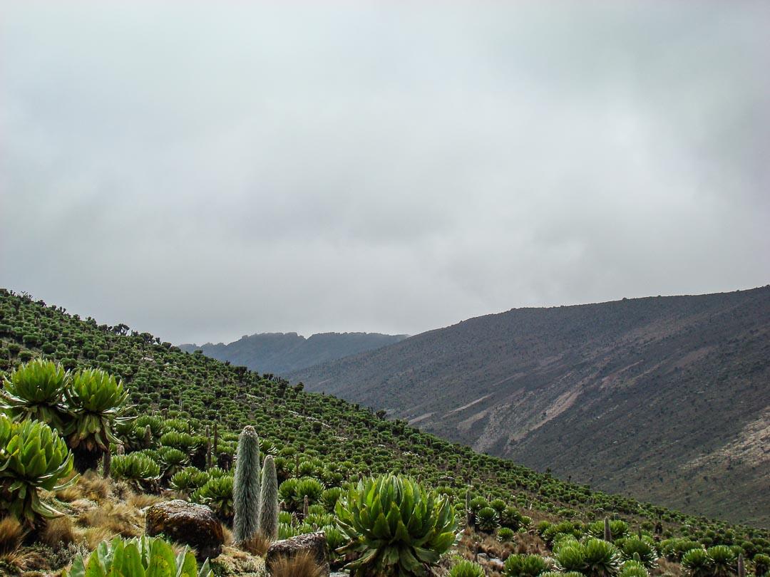 Mt. KENYA