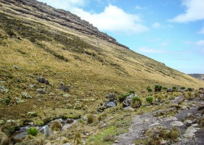 Mount Kenya-78