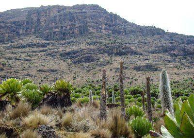 Mount Kenya-79