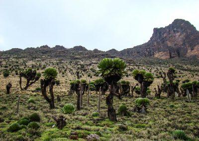 Mount Kenya-80