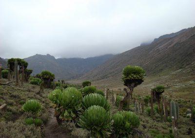 Mount Kenya-81