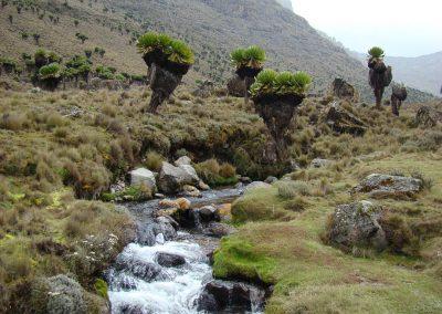 Mount Kenya-93