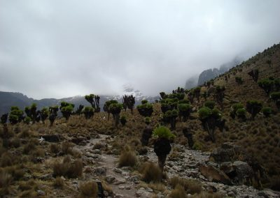 Mount Kenya-97
