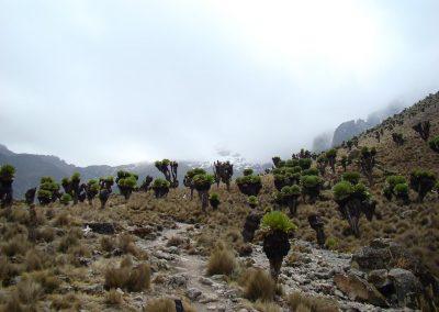 Mount Kenya-98