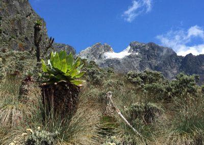 Mt Ruwenzori-22