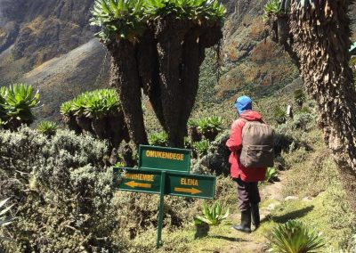 Mt Ruwenzori-28